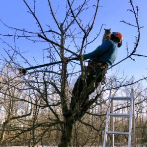 viljapuu hooldus - Heidi Hanso juures