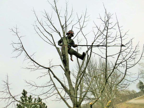 Puude hoolduslõikus