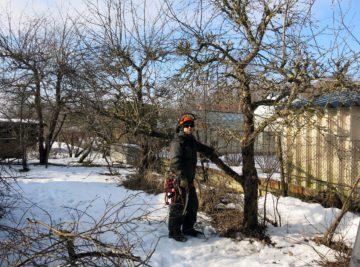 õunapuude hooldus Audru kandis